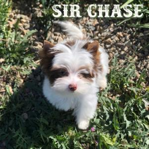Chase-1