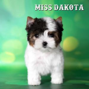 Dakota-Biewer-Puppy-1