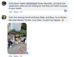 Friends of Rocky Mountain Biewer Terriers Experience5