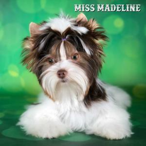 MadeLine-1