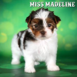 Madeline-2 copy