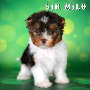 Milo-2018