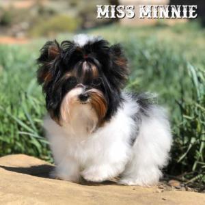 Minnie-Polly-1
