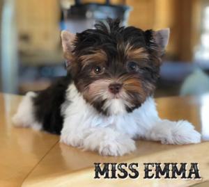 Miss-Emma-ready-1