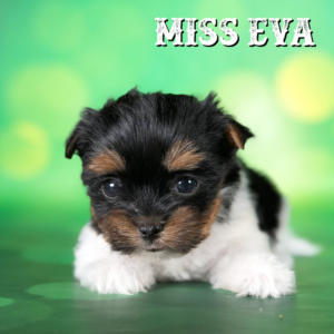 Rocky Mountain's Miss Eva