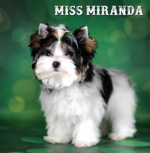 Miss-Miranda-1