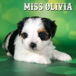 Olivia-2018-1