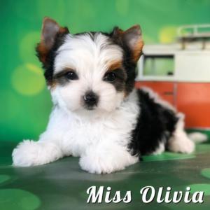 Olivia-8-Weeks-1