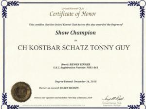 CH Kostbar Schatz Tony Guy