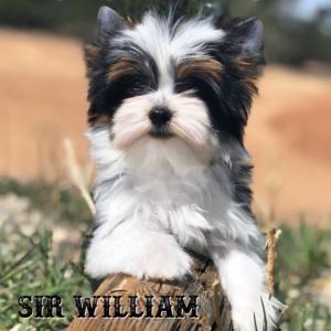William-12