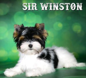 Windton-1