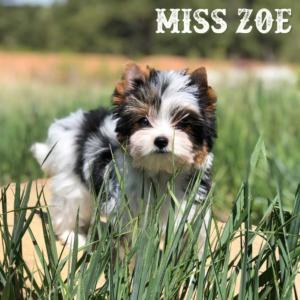 Zoe-1