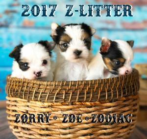 2017-Z-Litter-1