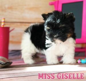Giselle-7-weeks-1